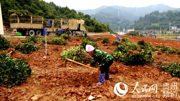 万博官网manbetx从江:建设年产10万吨油茶(枯)综合开发循环利用项目