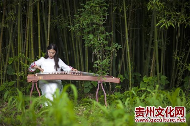 纳雍姑箐:静穆大山深处的千年老茶树